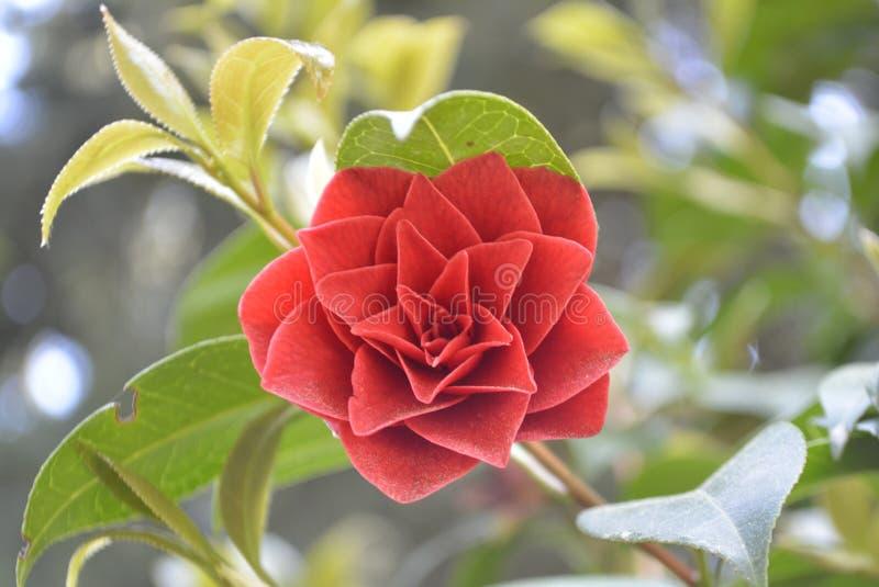 Flor hermosa imagenes de archivo