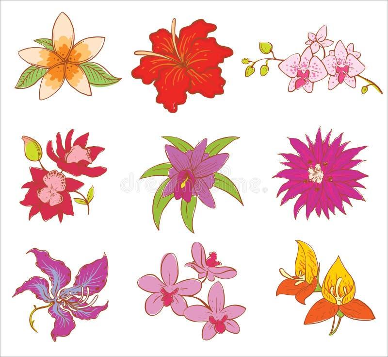 Flor hermosa de la acuarela fijada en blanco libre illustration