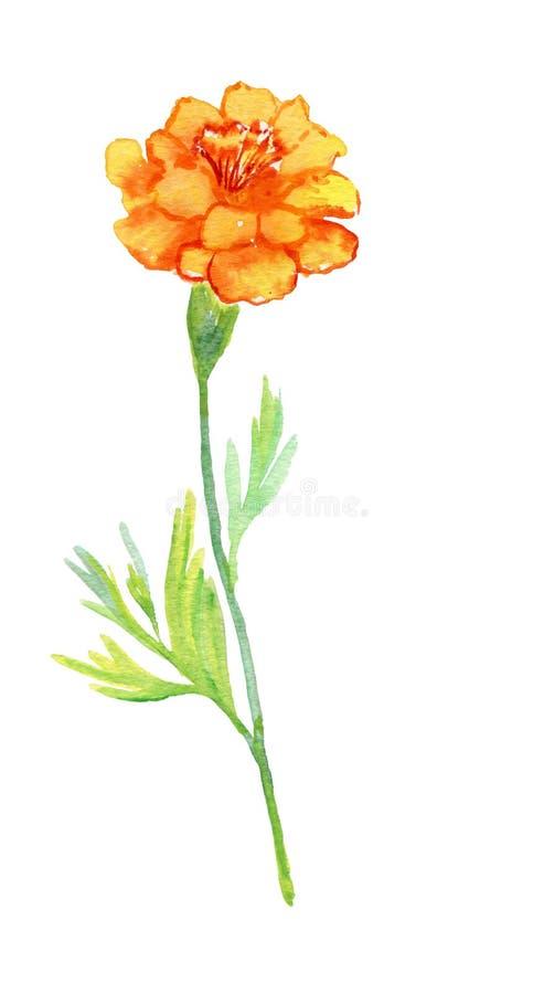 Flor hermosa de la acuarela Pintura de la acuarela stock de ilustración