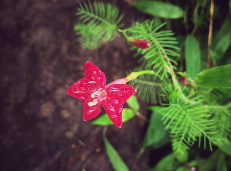 Flor hermosa de la monta?a fotos de archivo