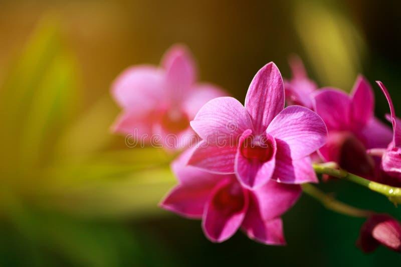 Flor hermosa de la orquídea rosada fotos de archivo