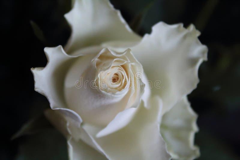 Flor hermosa de un color agradable y de un color agradable imágenes de archivo libres de regalías