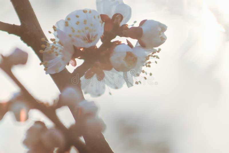 Flor hermosa del flor de la fruta imagenes de archivo