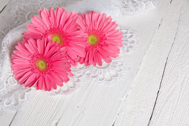 Flor hermosa del gerbera fotografía de archivo libre de regalías