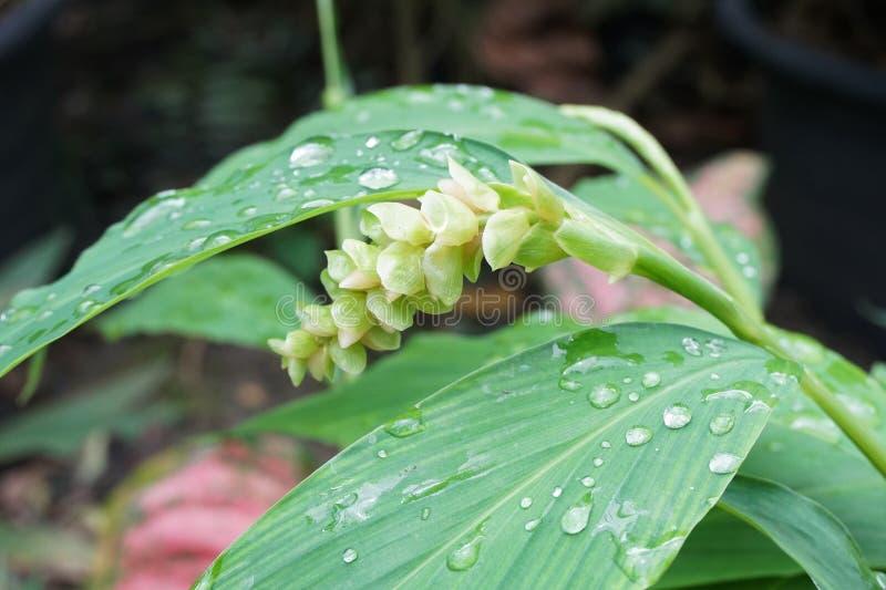Flor hermosa en jardín de la naturaleza imagen de archivo libre de regalías