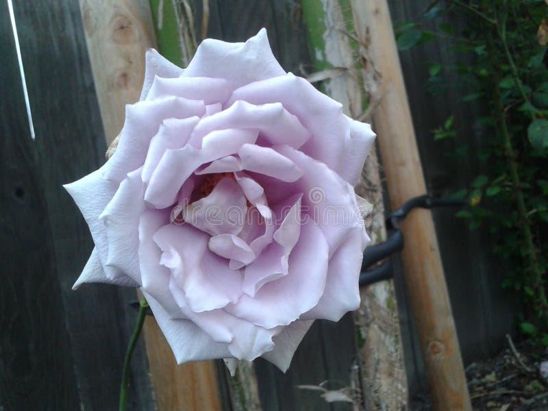 Flor hermosa en luz del día que muestran la naturaleza imagenes de archivo