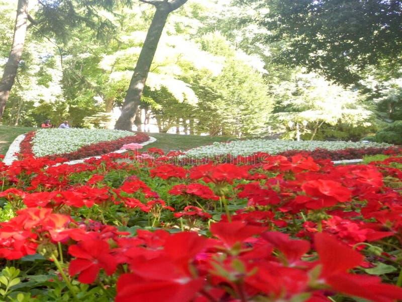 Flor hermosa en pavo imagen de archivo libre de regalías