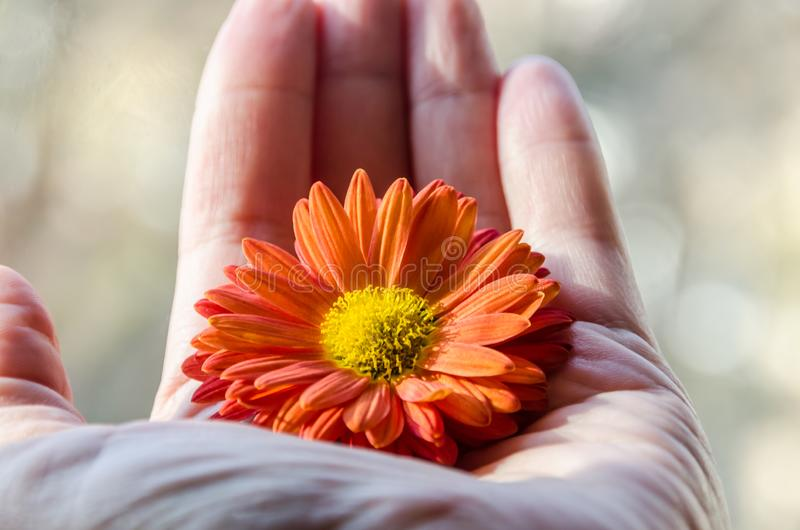 Flor hermosa en su palma fotografía de archivo