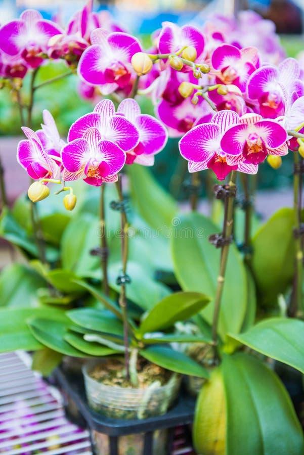 Flor hermosa para la venta en el mercado de la flor, Mong Kok imagen de archivo