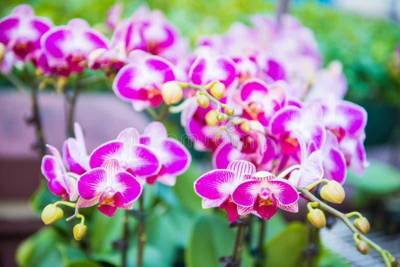 Flor hermosa para la venta en el mercado de la flor, Mong Kok imágenes de archivo libres de regalías