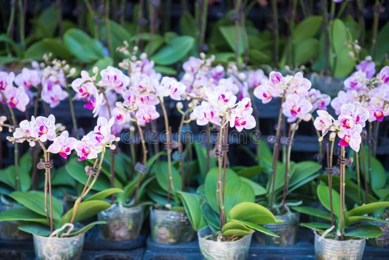 Flor hermosa para la venta en el mercado de la flor, Mong Kok fotos de archivo