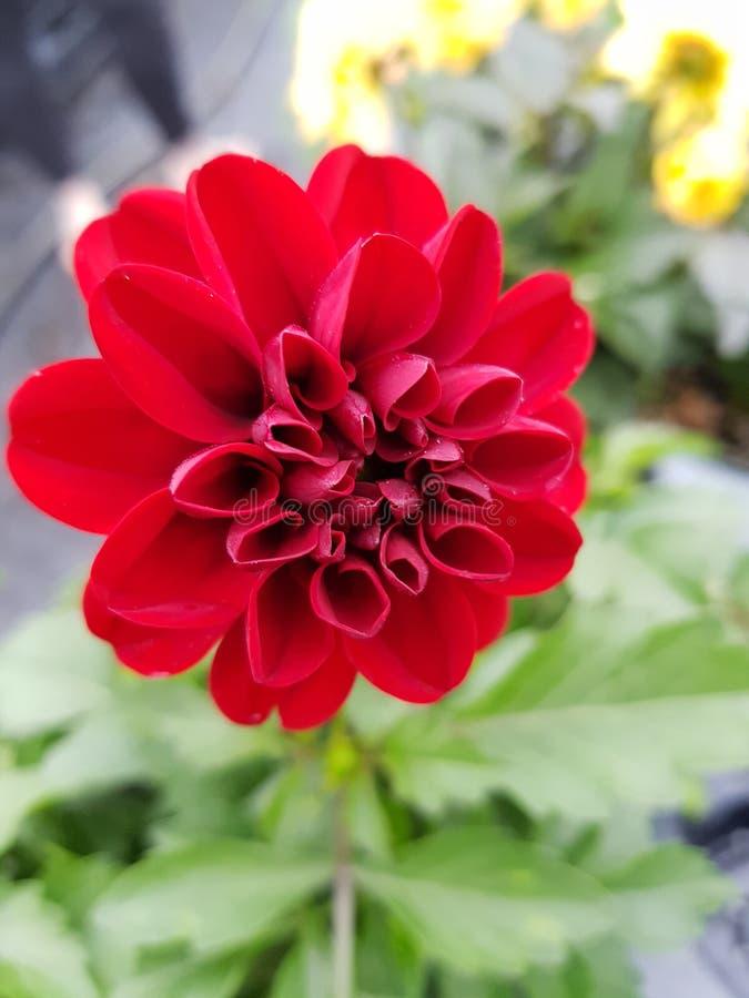Flor hermosa Paradise fotografía de archivo