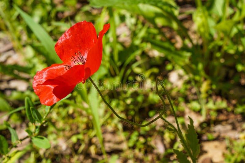 flor hermosa roja en el parque imagenes de archivo
