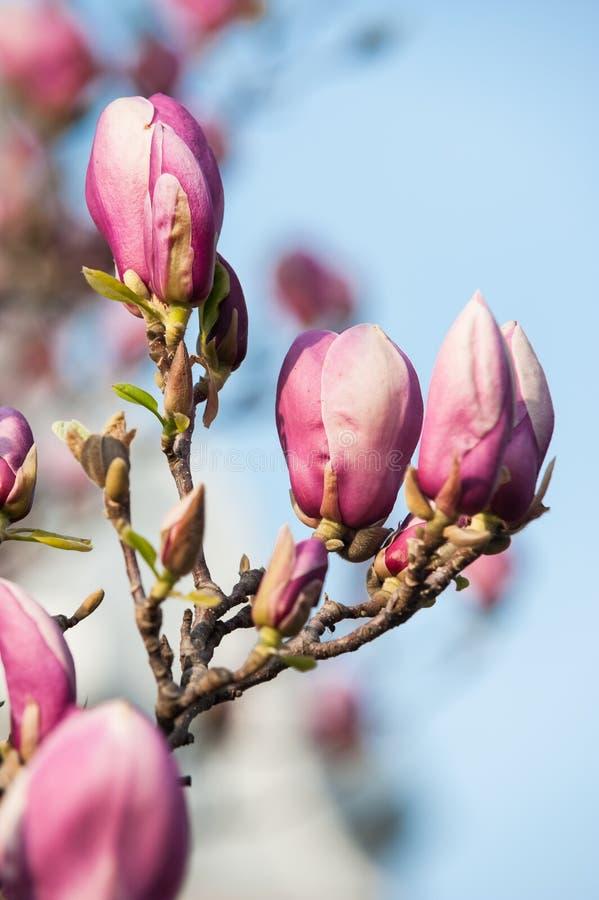 Flor hermosa violeta fotos de archivo