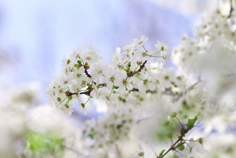 Flor hermoso de la fruta al aire libre fotografía de archivo libre de regalías