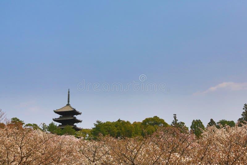 Flor hermoso de Sakura en el templo de Ninna-ji, Kyoto, Japón imagen de archivo