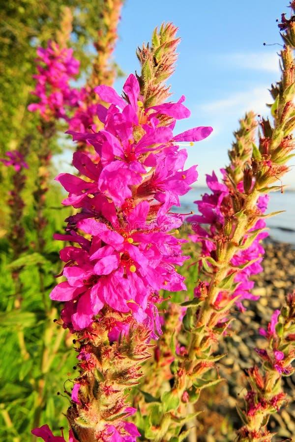 Flor increíble por el lago fotos de archivo libres de regalías