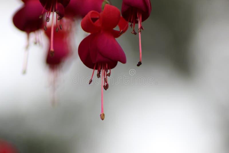 Flor indiana bonita fotos de stock royalty free