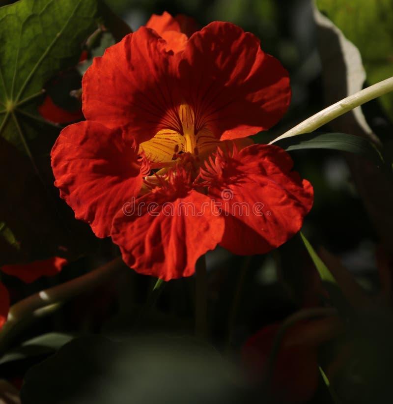 Flor; inflorescencia foto de archivo libre de regalías