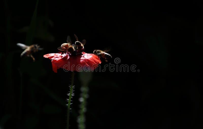Flor; inflorescencia fotos de archivo