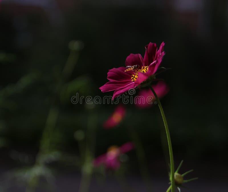 Flor; inflorescencia imágenes de archivo libres de regalías