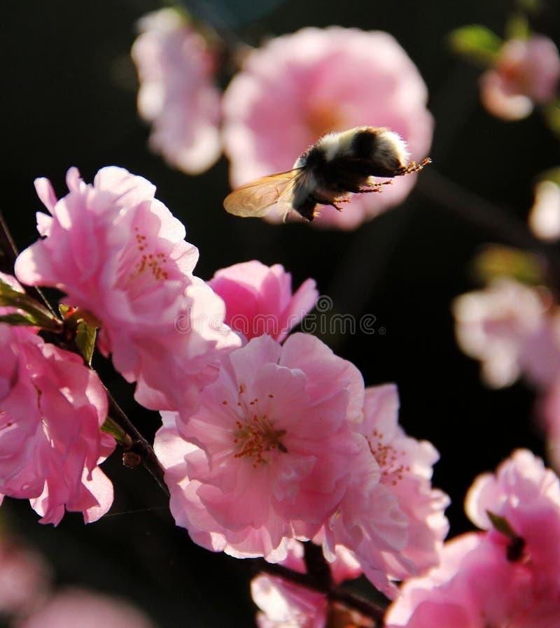 Flor; inflorescencia foto de archivo