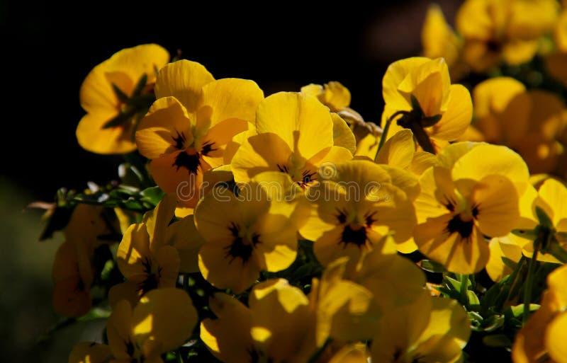 Flor; inflorescencia fotografía de archivo