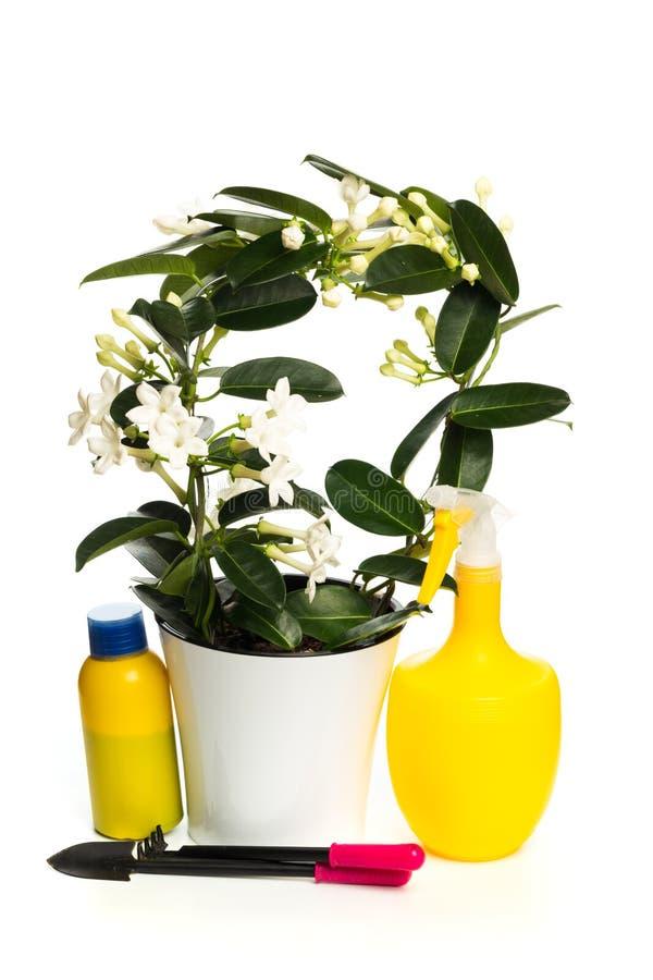 Flor interior con las herramientas de la planta en el fondo blanco imagen de archivo
