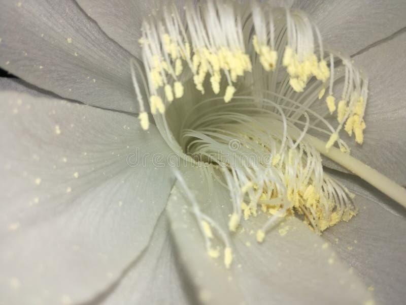 Flor interna foto de stock
