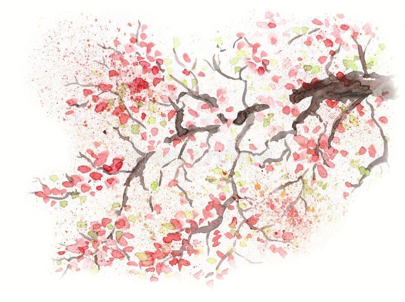 Flor japonesa da cereja da flor de cerejeira Ilustração da aguarela ilustração stock