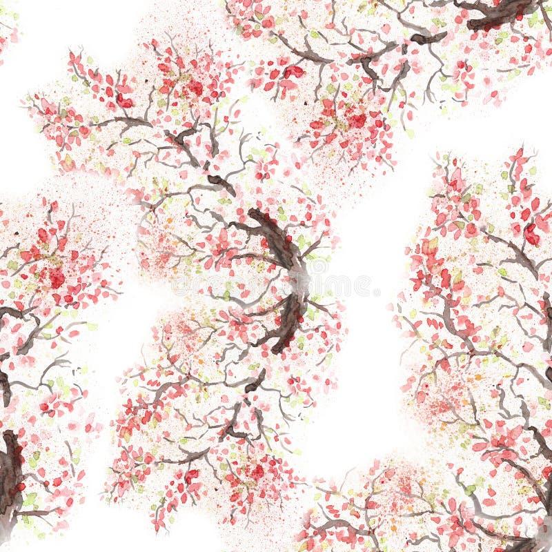 Flor japonesa da cereja da flor de cerejeira Ilustração da aguarela ilustração royalty free