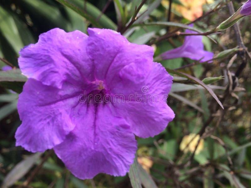 Flor, jardim, roxo imagem de stock royalty free