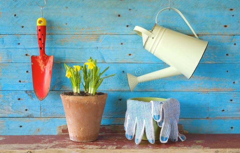 Flor joven con las herramientas que cultivan un huerto, imagen de archivo libre de regalías