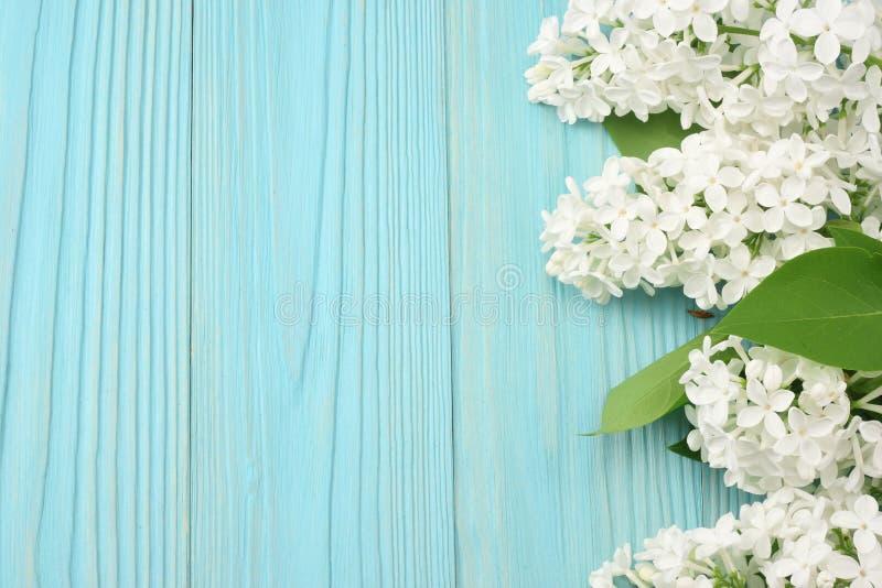 flor lilás branca no fundo de madeira azul Vista superior com espaço da cópia foto de stock royalty free