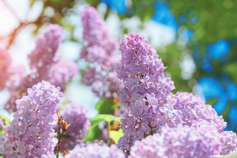 Flor lilás brilhante no fundo do céu azul imagem de stock royalty free