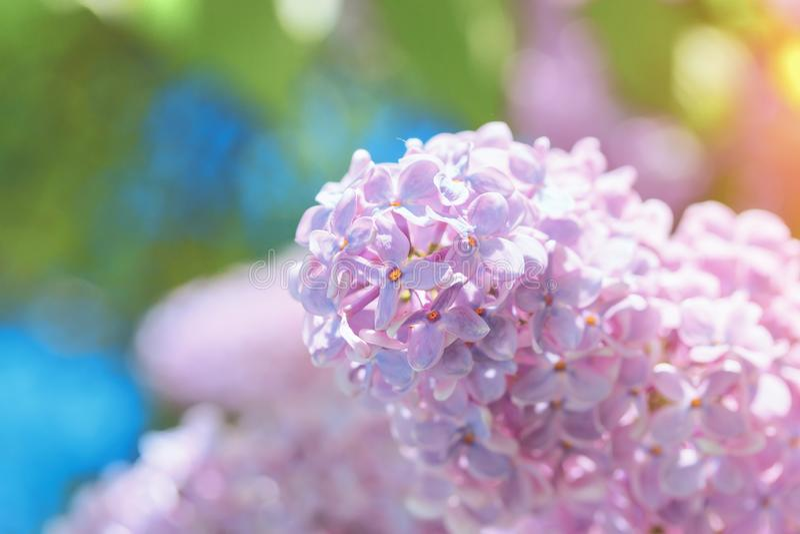 Flor lilás brilhante no fundo do céu azul imagens de stock royalty free