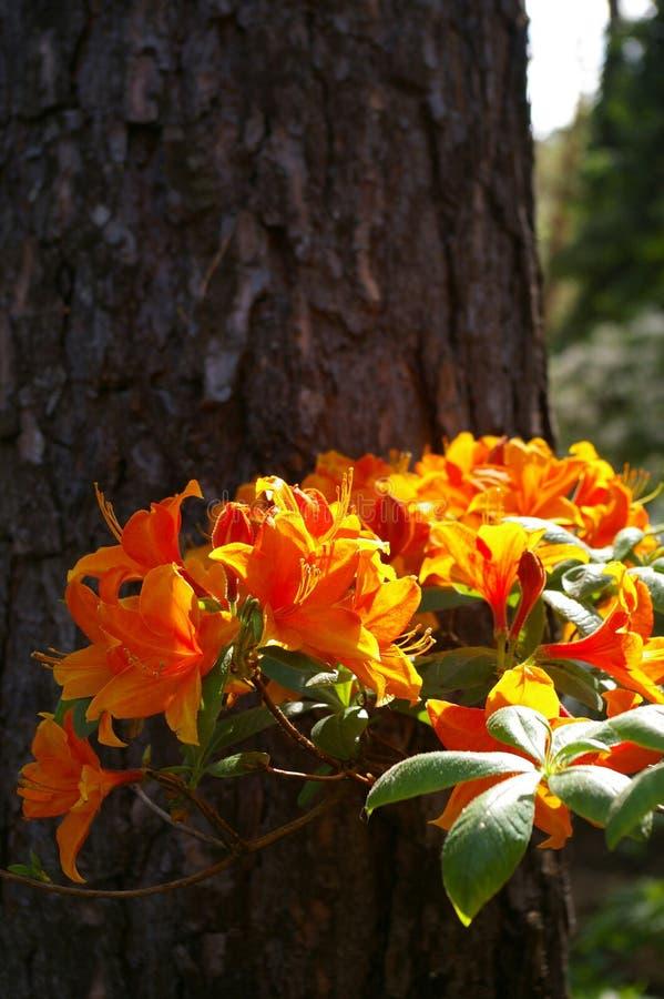 Flor lituana foto de stock