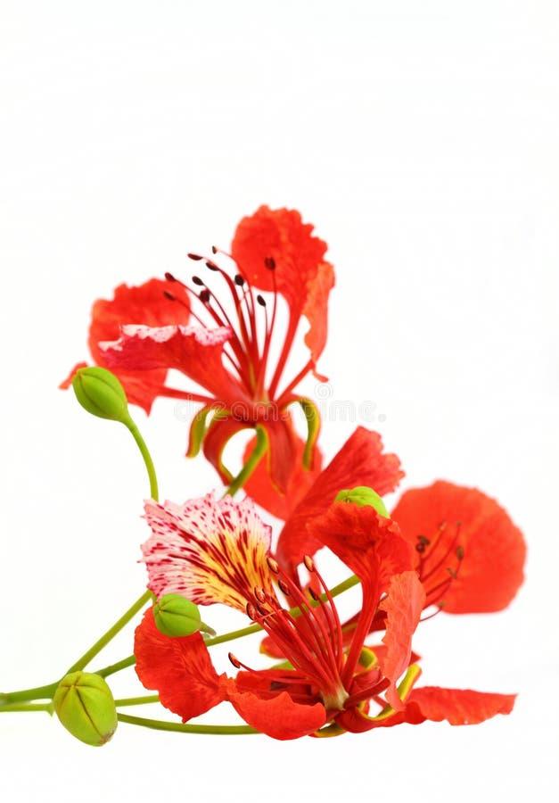 Flor llamativa fotografía de archivo