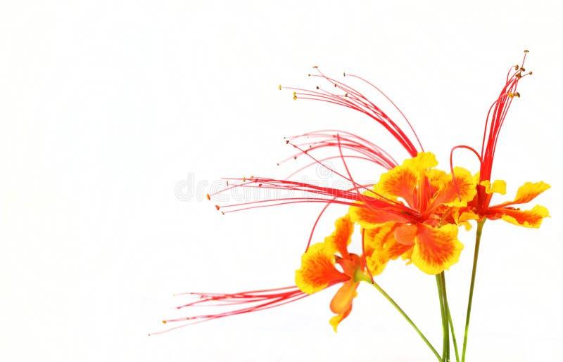 Flor llamativa fotos de archivo libres de regalías