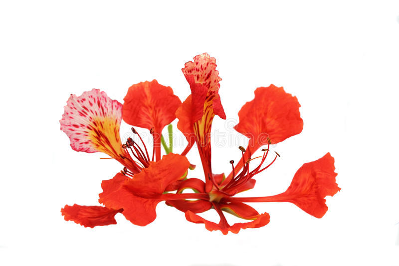 Flor llamativa foto de archivo