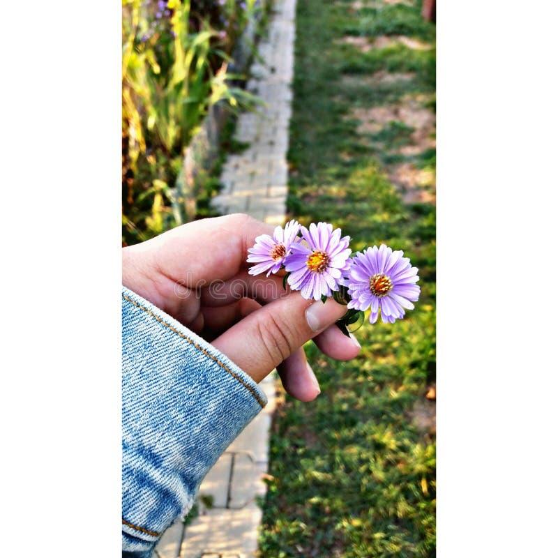 a flor loura fotografia de stock royalty free