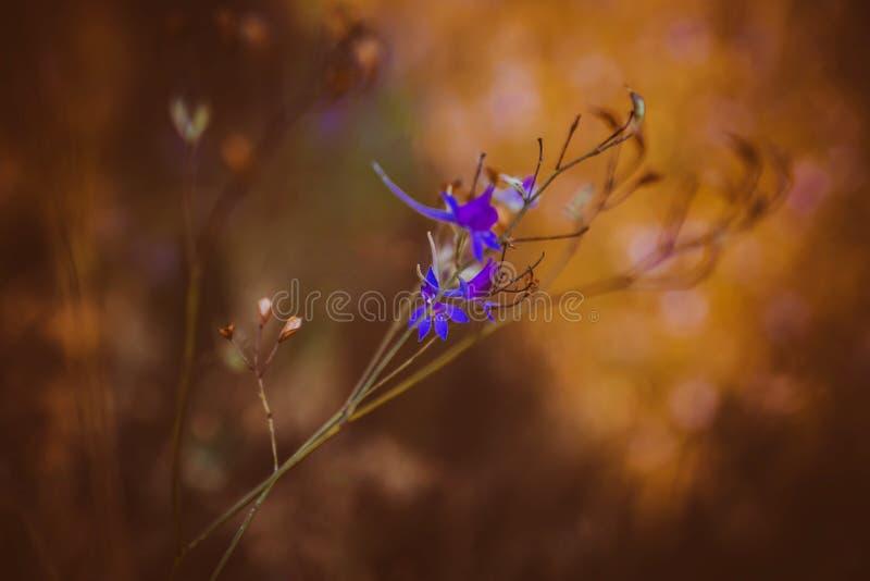 Flor macra fotografía de archivo libre de regalías