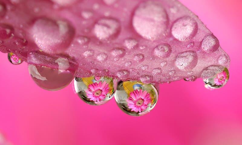 Flor macra de la gota del agua imagen de archivo libre de regalías
