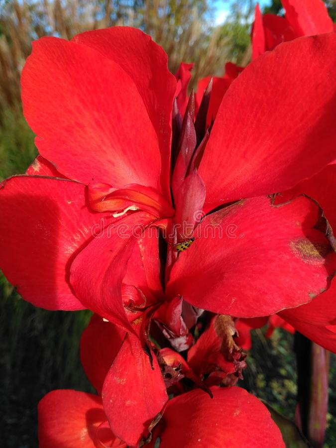 Flor macro imagens de stock royalty free