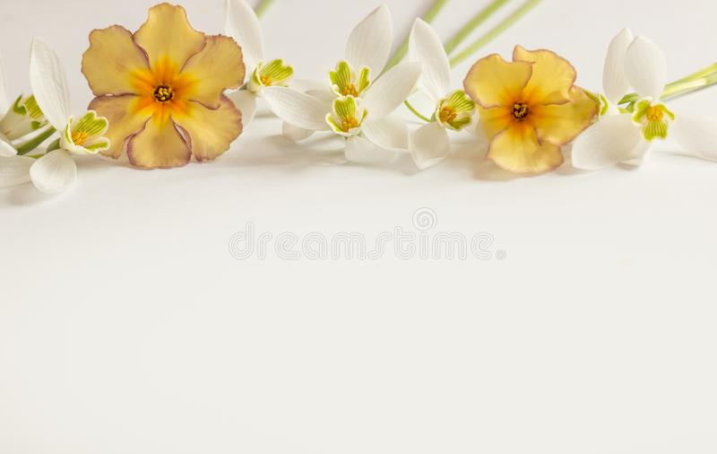 Flor macro da mola - snowdrops Gallanthus e prímulas isoladas no fundo branco imagem de stock royalty free