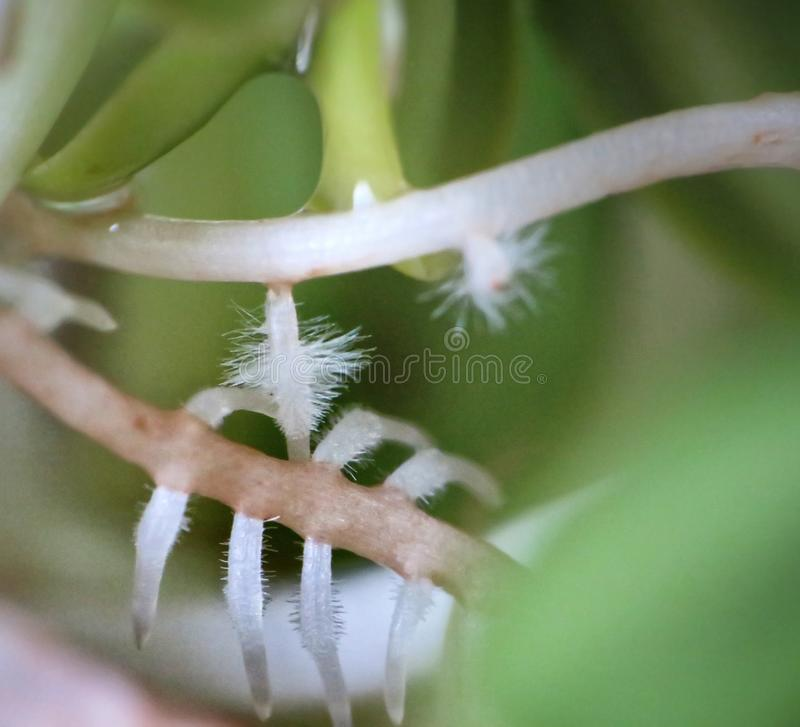 flor macro dos brotos imagem de stock