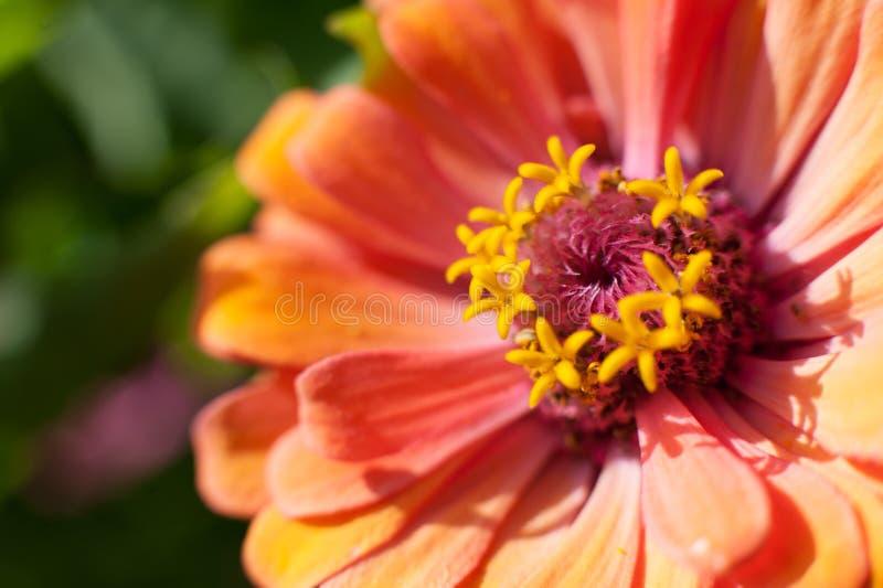 Flor macro na luz solar fotografia de stock royalty free