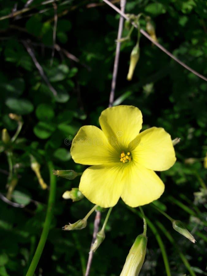 Flor Mallorca imagem de stock royalty free