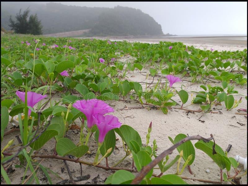 Flor, mar, violeta, apenas, praia imagens de stock
