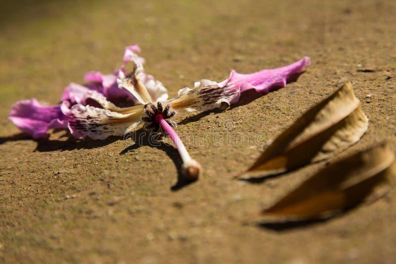 Flor maravilhosa no jardim foto de stock